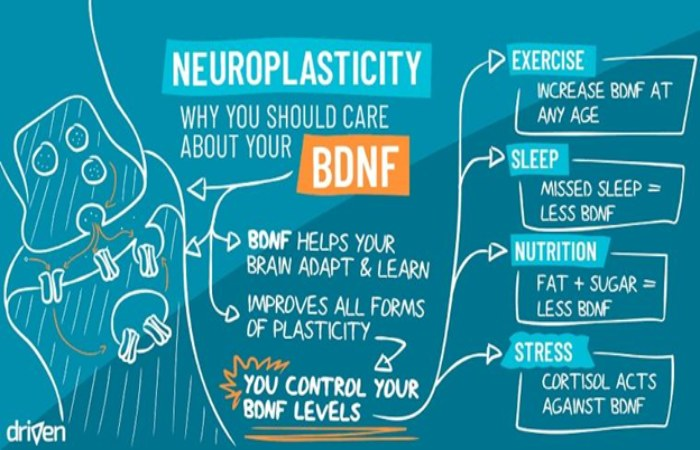 Treatment of BDNF